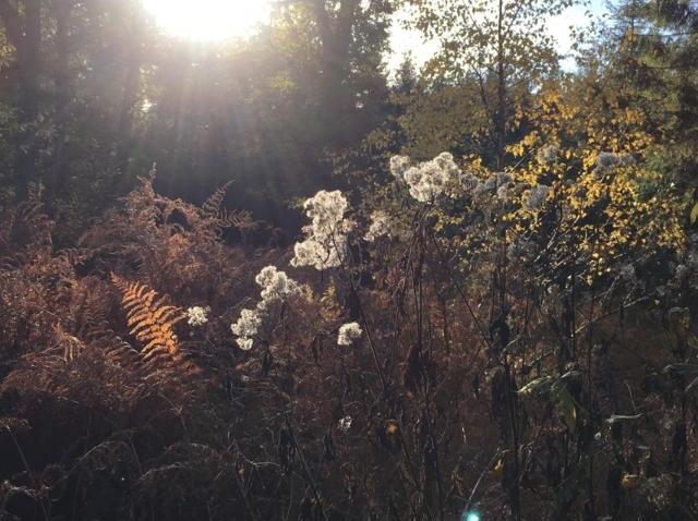 Symbolbild Ayurveda im Herbst