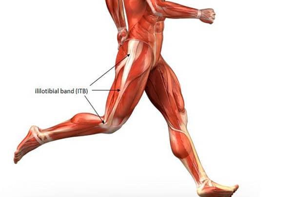 Darstellung des Ilio tibialen Bandes an Muskelskelett