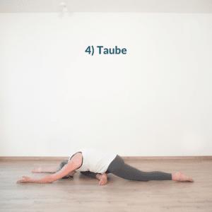 Taube im Yoga